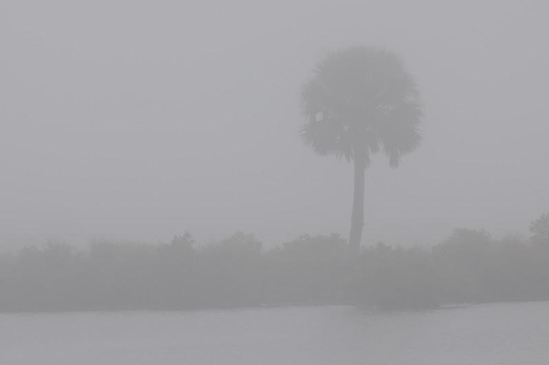 Merritt Island National Wildlife Refuge in the fog.