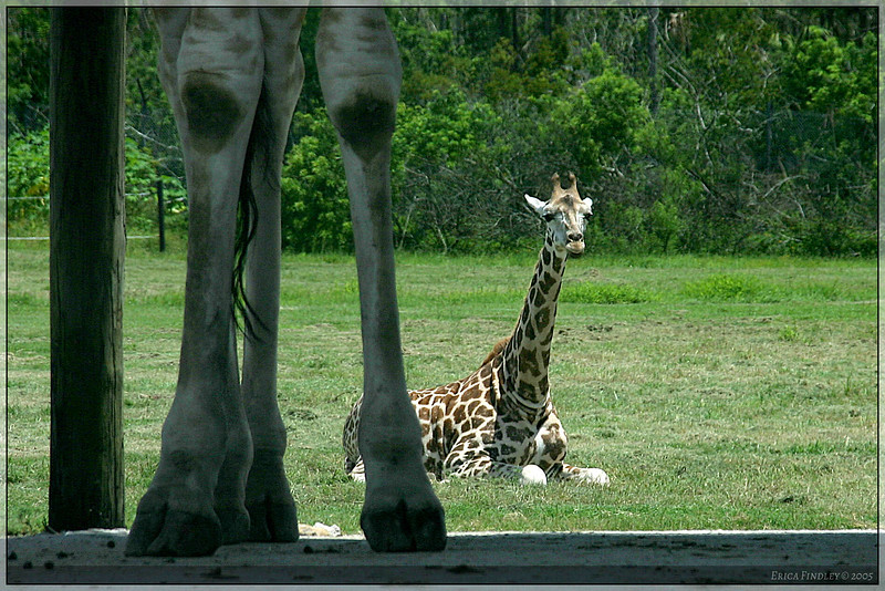 243_PalmBeach_LionCountry_July2005.jpg