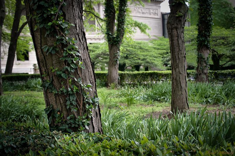Museum Trees