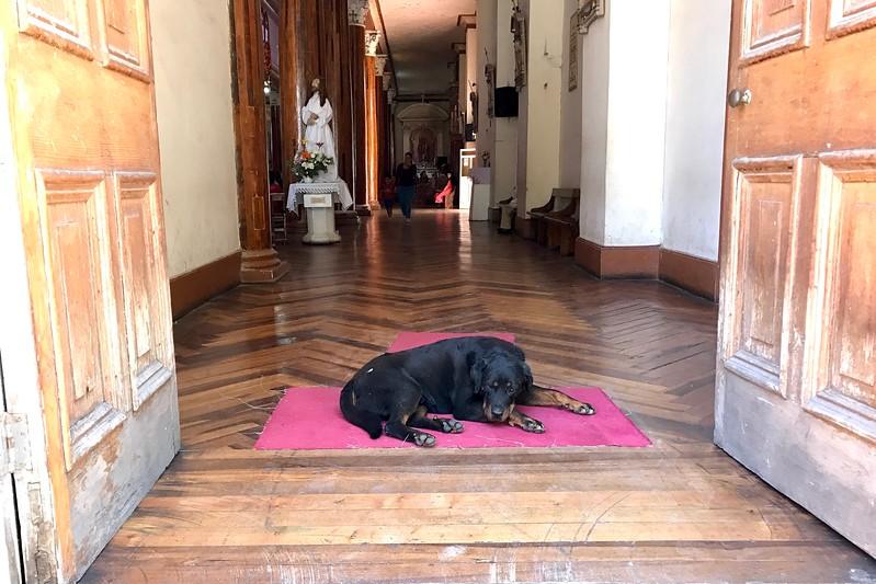 Stray Dog in Church in Vinuna
