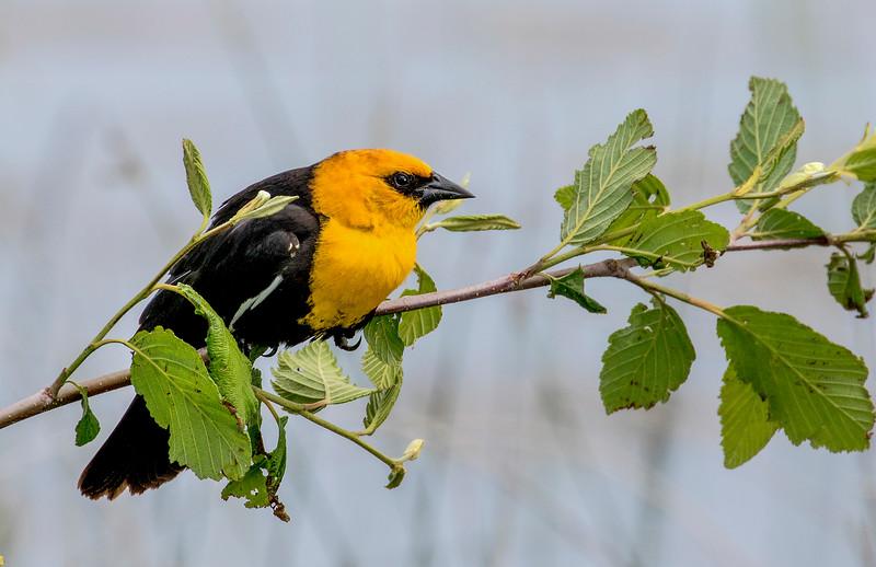smug bird1.jpg