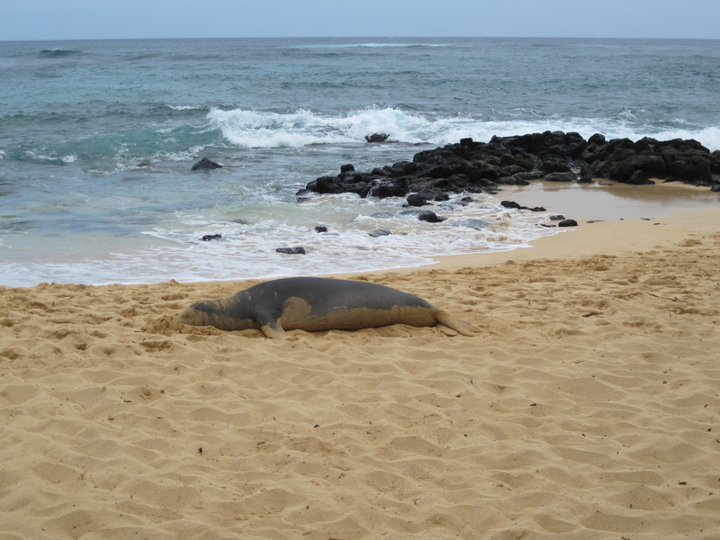 2009 07 24 Monk Seal 005.jpg