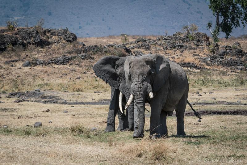 Tanzania Ngorongoro Crater, elephants-4405.jpg