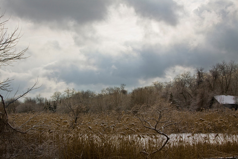 Winter along the Peconic River. Calverton, N.Y. - 01/08/2011