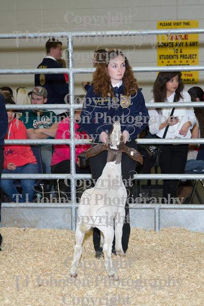 2013 Klein ISD Goat Show Class 1