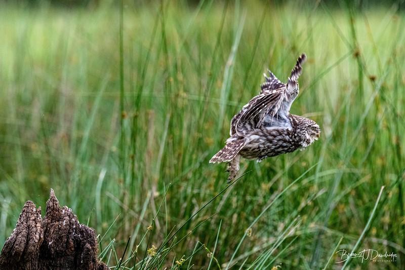 The Little Owl Shoot-6823.jpg