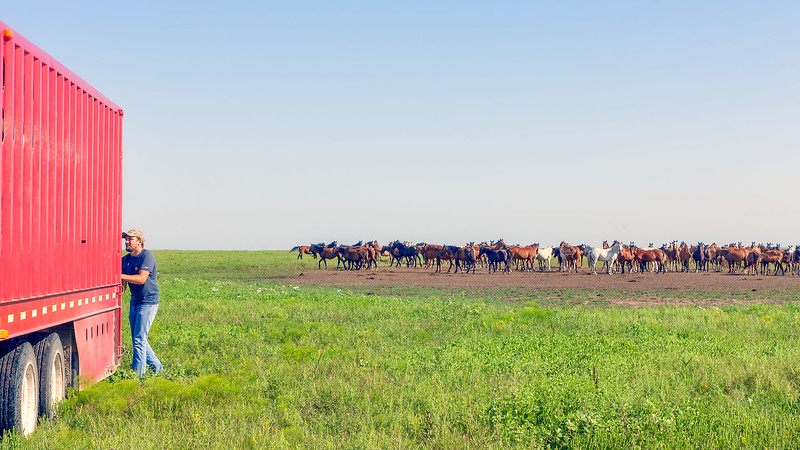 This group of mares is curious about who is about to join them when the trailer gate is opened.