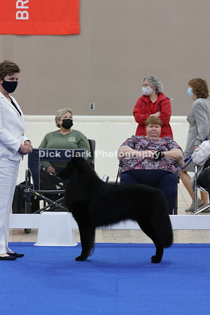 Best of Breed Dog