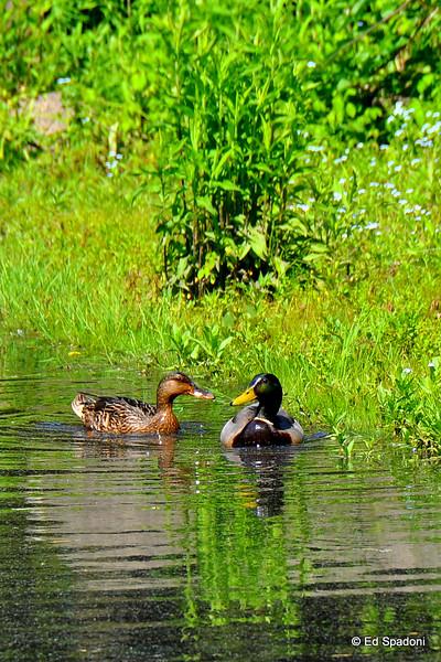 Bird Park, Walpole, MA