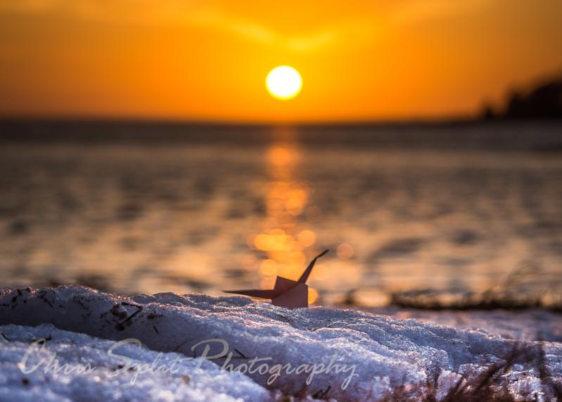 sunset crane 2 a (1 of 1).jpg