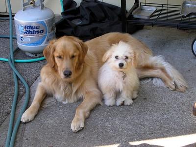August 2005 Dog Pics