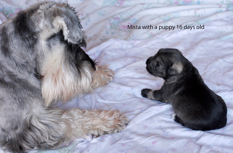 Mista and Puppy 16 days old.jpg