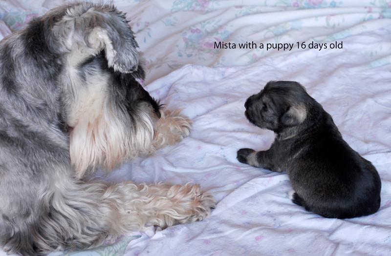 Mista and Puppy 16 days old.jpg