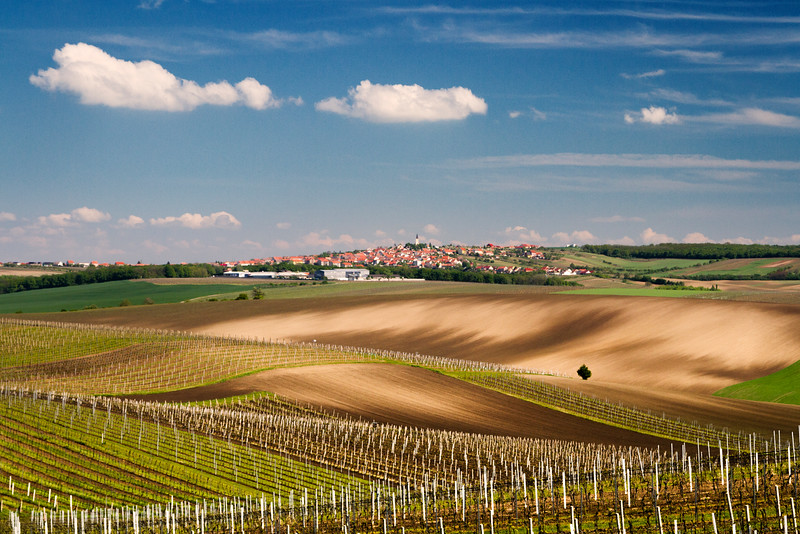 Moravian wineyards