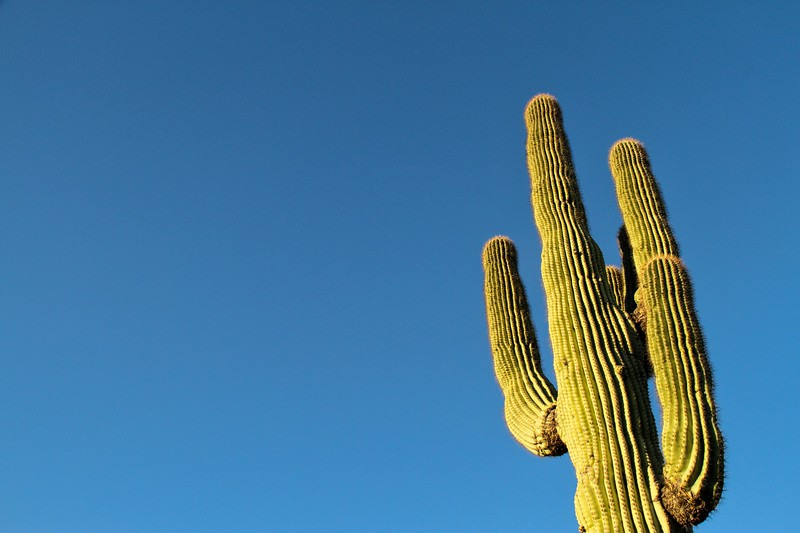 Saguaro with Blue Copy Space