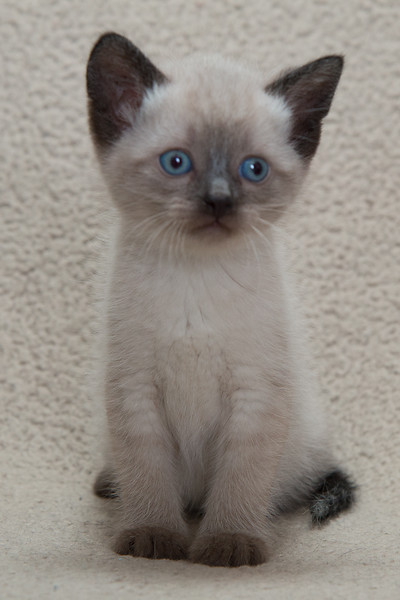 Abel kitties-12.jpg