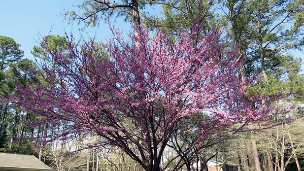 Spring 2016 in my neighborhood .  .  .