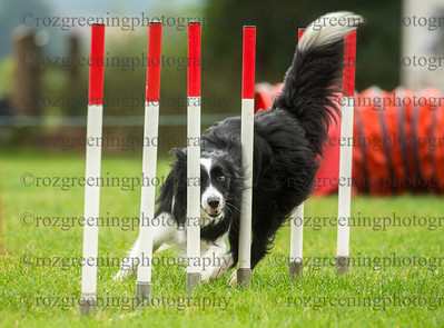 Bromsgrove Sunday Colimanor Large Agility Combined 1-2