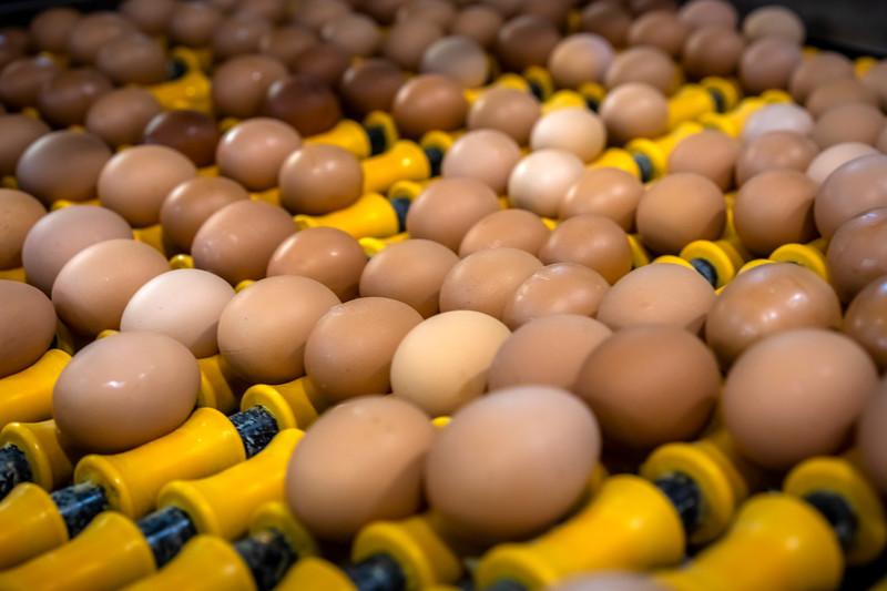 Eggs 43.jpg