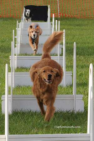 Molly's flyball class