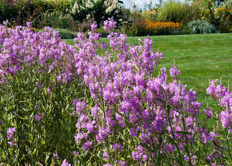 2009 09 06_White Flower Farm_0122_edited-1.jpg