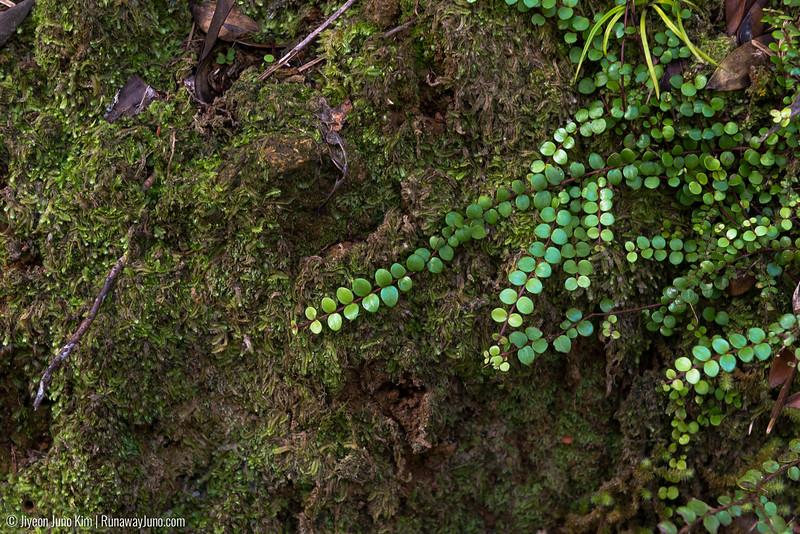 Greenery in New Zealand