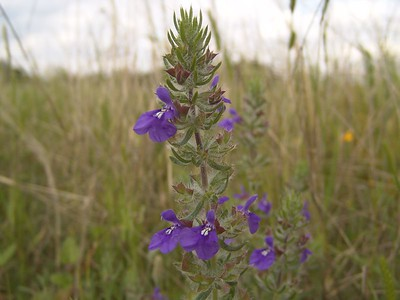 Wildflowers at Mansfield Dam 4/18/04