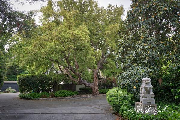 Andrews Garden
