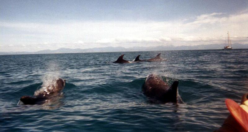 041.Dolphins.jpg