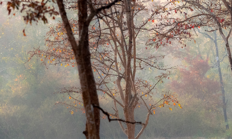 Florestas | Forests
