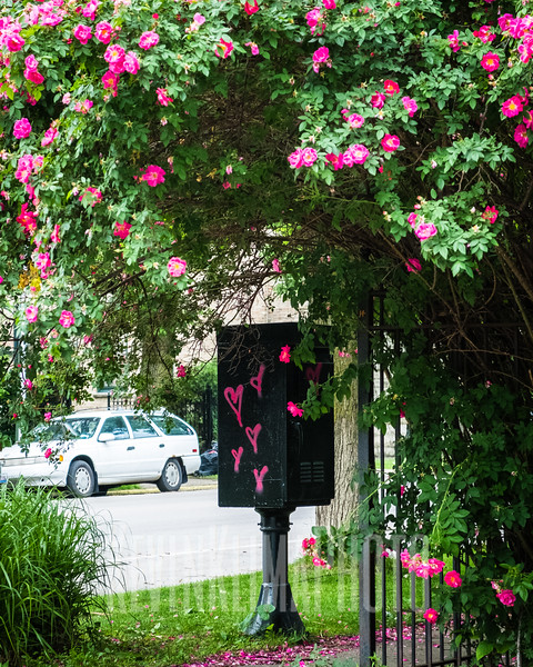 pinkheartflowertree2.jpg