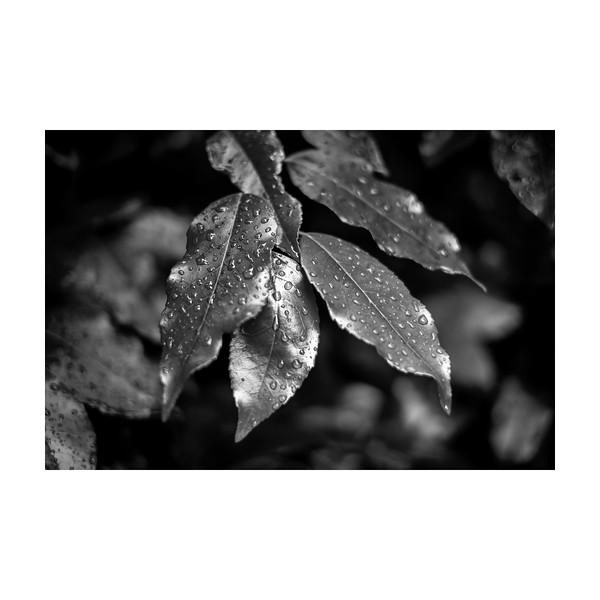 203_leafdrop_10x10.jpg