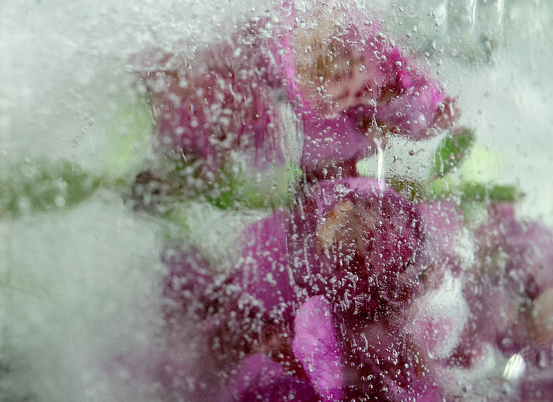 MISC 04 Frozen Flowers