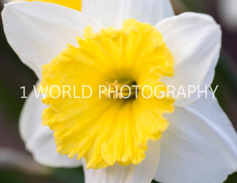 20190416Spring Flowers_Cantigny 4_17_19259--93.jpg