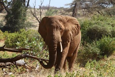 African Wildlife