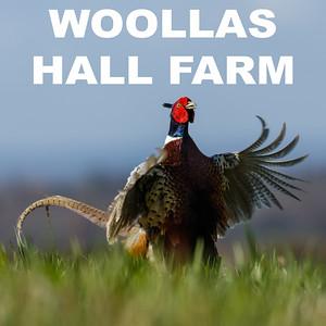 Woollas Hall Farm
