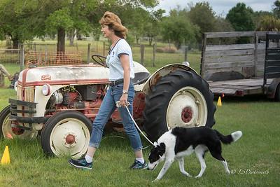 "Farm Dog PM  St Patrick""s Day"