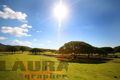 Akahi landscaping 2-16-10