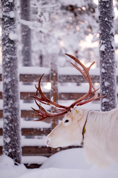 Finland_160117_100.jpg