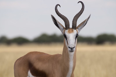 Khutse Game Reserve, Botswana