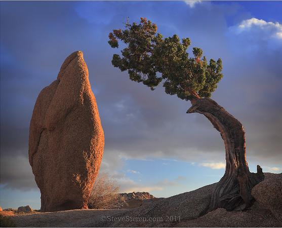 Joshua_tree_balandce_rock_Leaning_Juniper.jpg