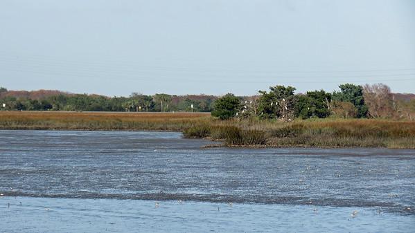 November 26:  Marshes of Glynn Overlook Park .  .  .