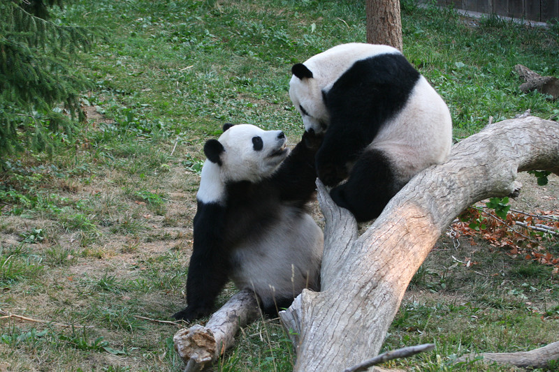 Panda080407_0013.JPG