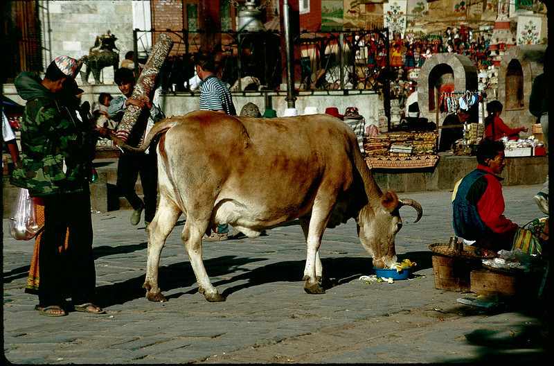 Nepal1_009.jpg