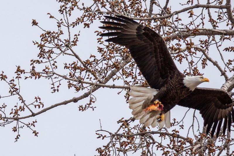 Eagle Bird-3.JPG