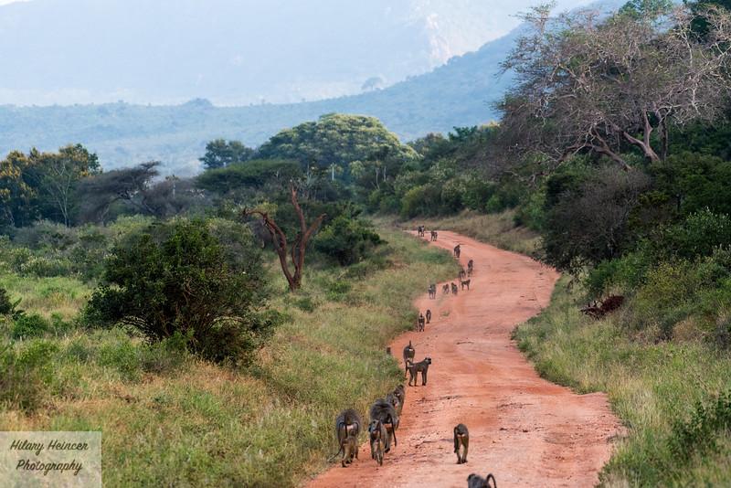 Kenya Wildlife-82.jpg
