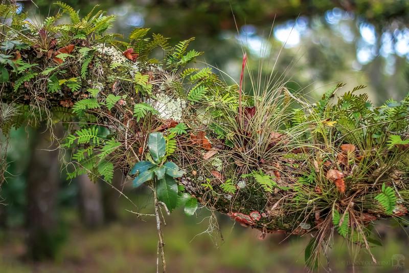 Epiphyte diversity