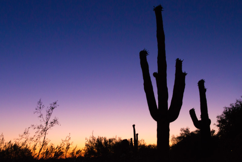 Saguaro trio landscape.jpg
