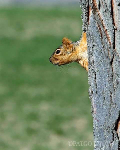I'll Admit It.  I Like Squirrels.