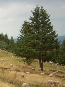 Cantal - Haut Cantal - Col de la Molède